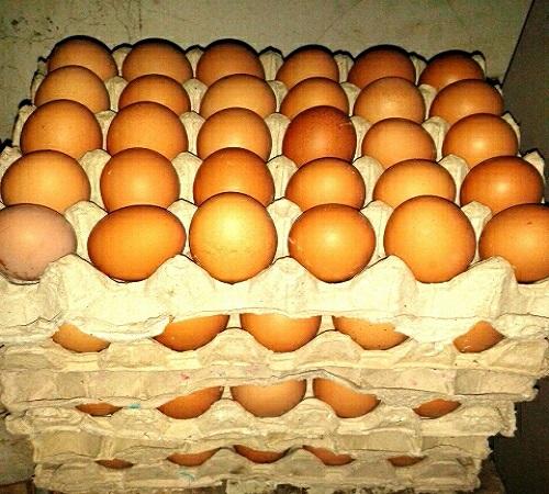 karton wadah telur