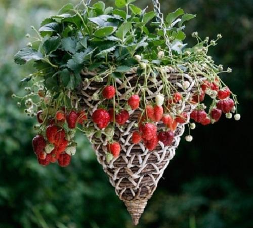 pot bunga dari anyaman