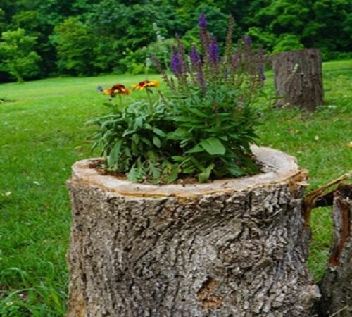 pot bunga dari tunggul pohon